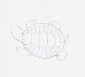 turtle pencil sketch
